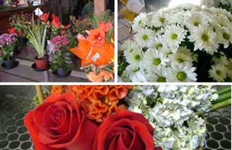 Floricultura Carana
